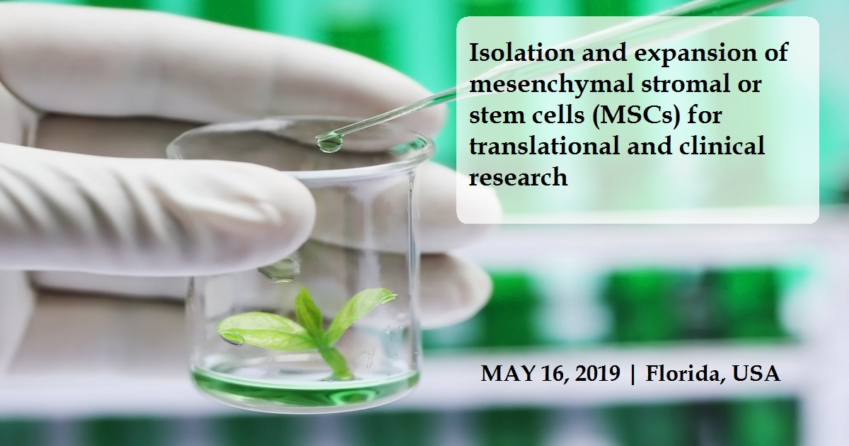 Isolation and expansion of mesenchymal stromal or stem cells (MSCs) for translational and clinical research