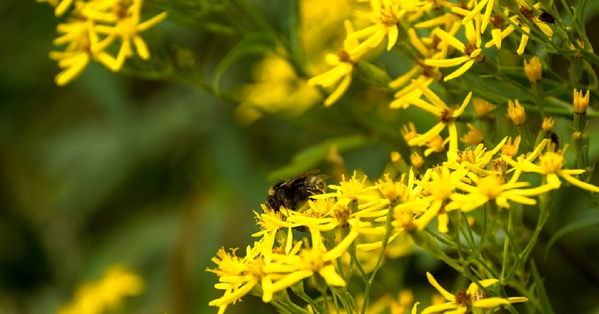 ALLERGIES: WHY IS THE IMMUNE SYSTEM BEING SO SENSITIVE?