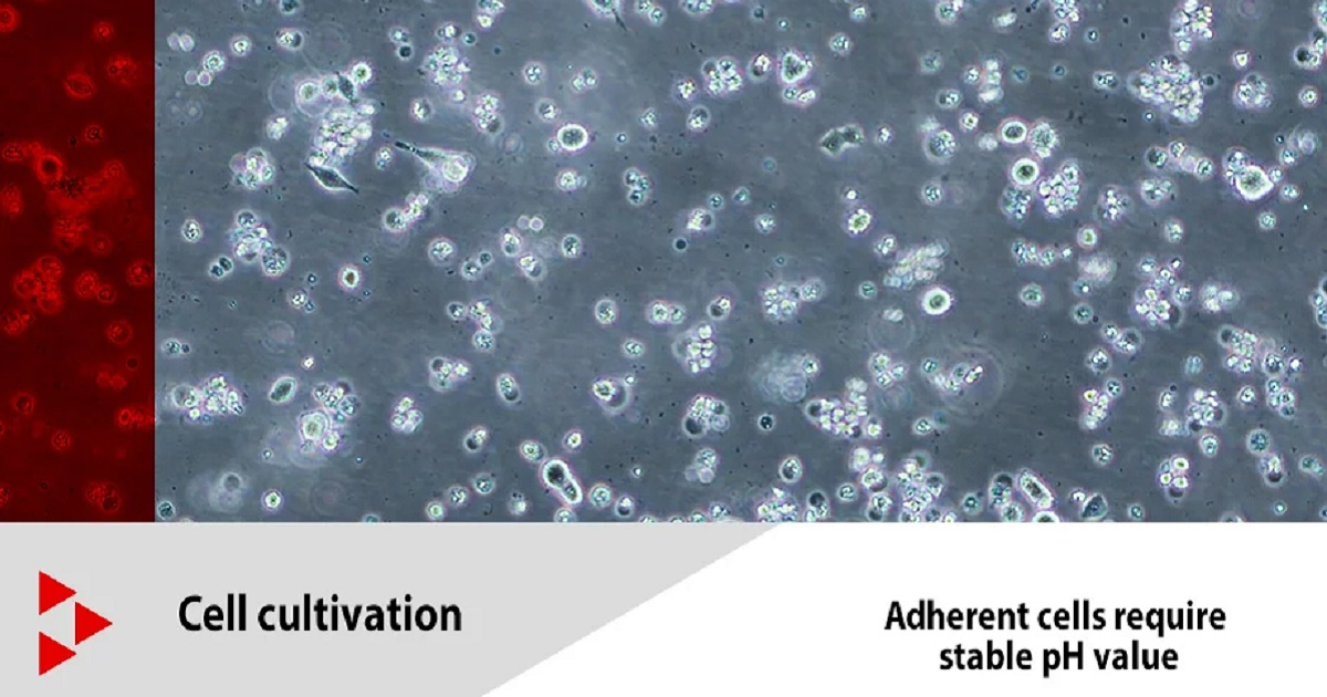 THE PH VALUE IS A KEY FACTOR IN CELL AND TISSUE CULTURES