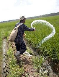 ELIMINATING SYNTHETIC FERTILIZER WON'T SOLVE AGRICULTURE'S NITROGEN POLLUTION PROBLEM